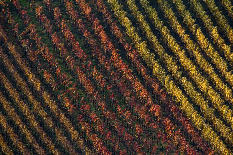 Full frame shot of farm