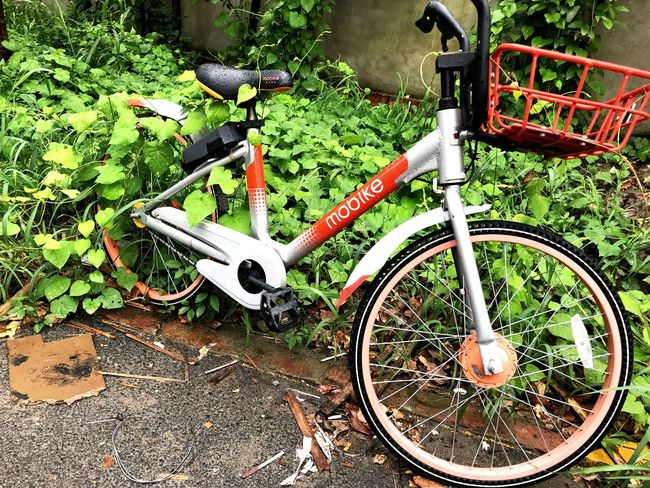 Bicycle Transportation Day Land Vehicle No People Mode Of Transportation Metal Nature Outdoors Plant Leaf Wheel