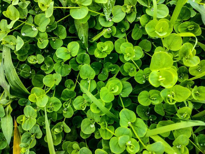 Full frame shot of raindrops on plants