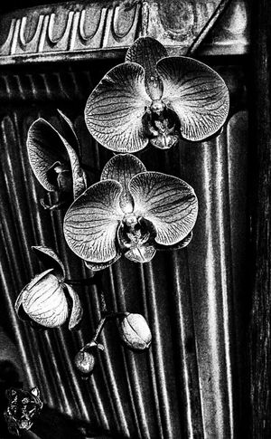 Flowers in bw Flowers, Nature And Beauty Flower Photography Flowers In Rain Black & White