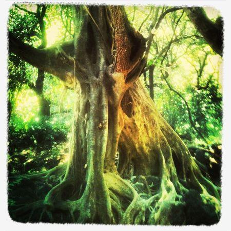 Tree Energy EL ARBOL DE LA TEMPLANZA