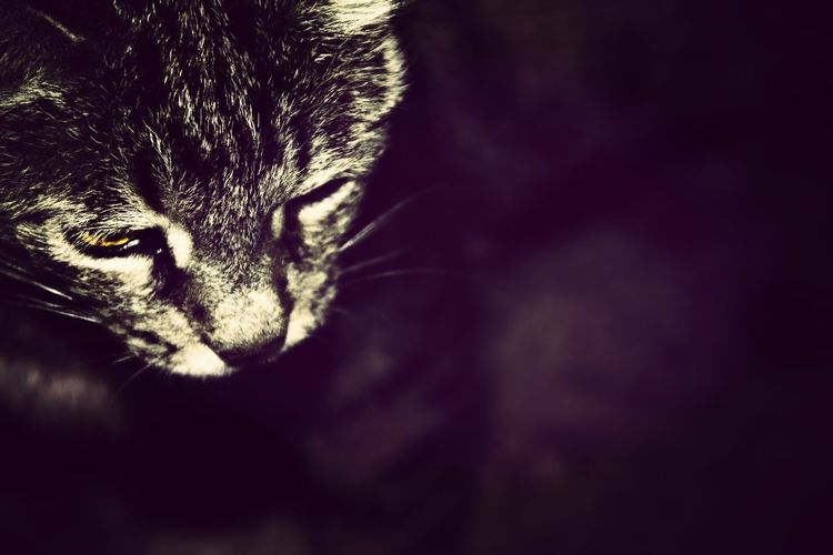Animal Photography Cat Small DOF