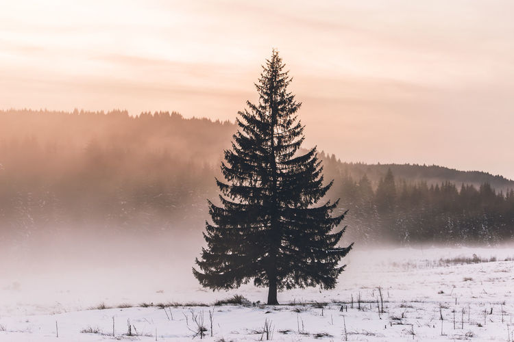 Landscape_Collection Shades Of Winter Snow ❄ Tree Trees Winter Beauty In Nature Cold Cold Temperature Day Landscape Nature No People Outdoors Scenics Sky Snow Spruce Tree Sunset Tranquil Scene Tranquility Tree Weather Wilderness Winter