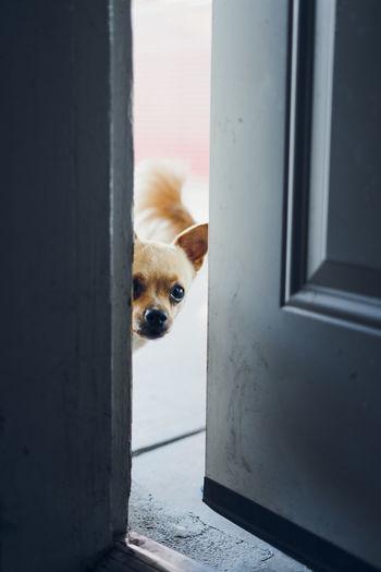 Animal Themes Dog Domestic Animals Door Doorway Looking Through Window One Animal Open Door Pets
