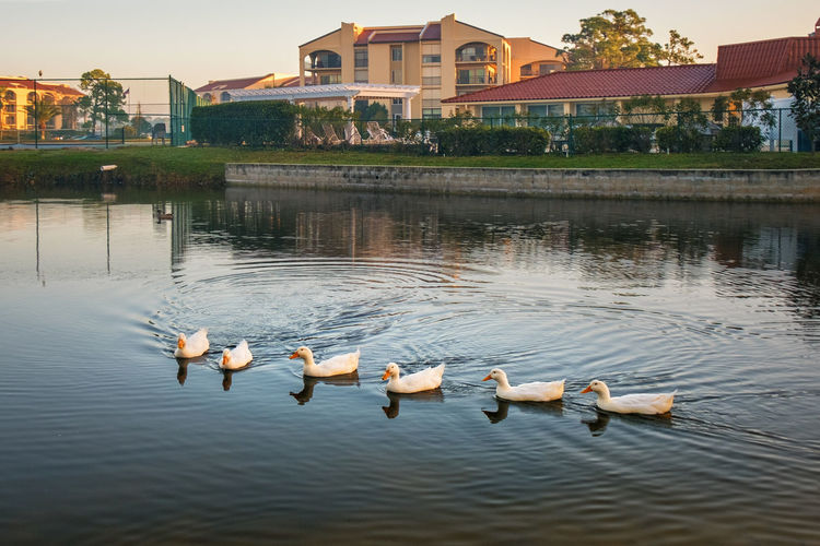 Water Group Of Animals Architecture Built Structure Lake Building Exterior Bird Animal Wildlife Animal Animal Themes Animals In The Wild Vertebrate Waterfront Swimming Swan Nature No People Reflection Water Bird Outdoors Cygnet Animal Family