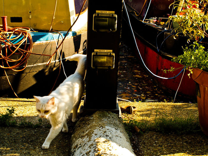 High angle view of cat walking by canal