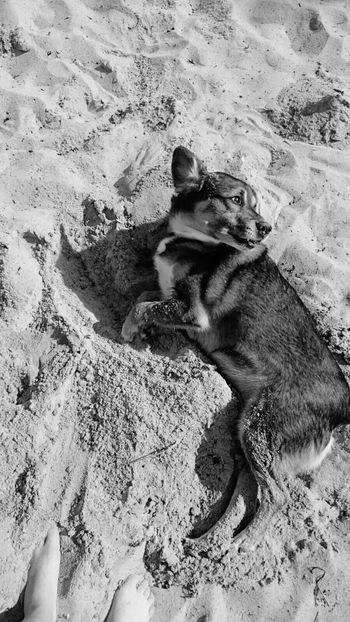 beach means fun 🐶 EyeEm Sun Beach Photography Relaxing Fun Dog Sand Ocean Long Day