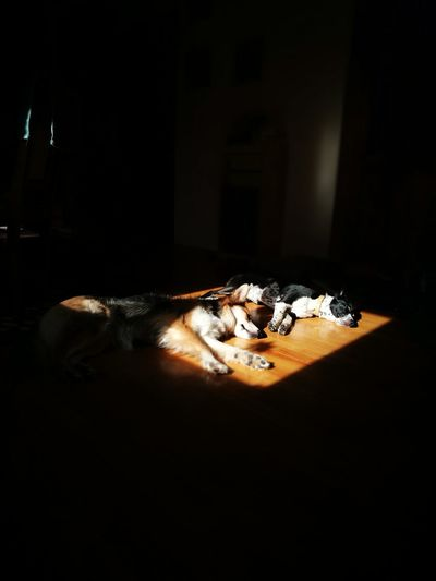 sunbathing Dogs Sunbathing Spring Sunshine Light Sleeping Siesta Springtime Table Close-up