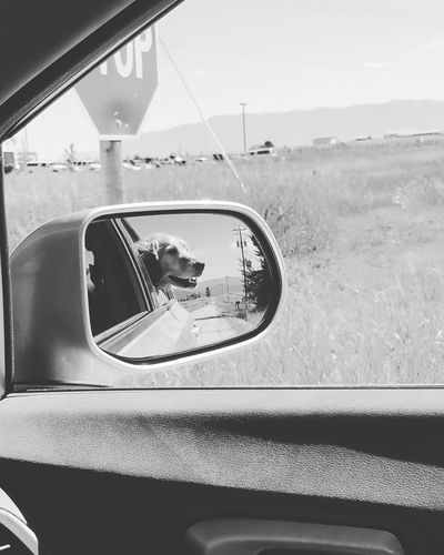 Reflection Of Dog In Side-View Mirror