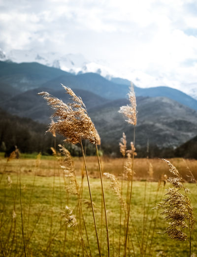 Beauty In Nature Close-up Day Field Grass Landscape Mountain Nature No People Outdoors Reed - Grass Family Sunlight EyeEmNewHere