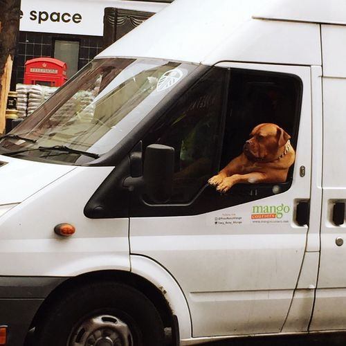 London Lifestyle delivery dog
