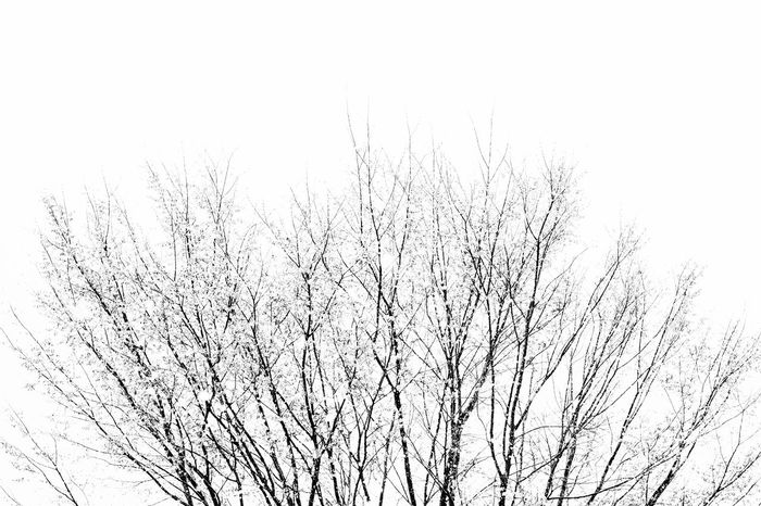 Motion Backgrounds Abstract No People Ink Nature Animal Themes Day Outdoors Street Photography Beauty In Nature Black And White Photography Outdoor Photography Trees Experimental Photography Sky Low Angle View Nature Silhouette Darkness And Light