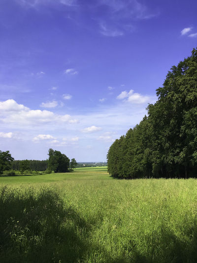 Bei Alling/Obb. - Blick am Waldesrand entlang, im Hintergrund Puchheim-Bahnhof Alling Bayern Beauty In Nature Blue Cloud - Sky Field Grass Grassy Green Green Color Idyllic Landscape No People Non-urban Scene Oberbayern Outdoors Puchheim Remote Rural Scene Tranquil Scene Tranquility