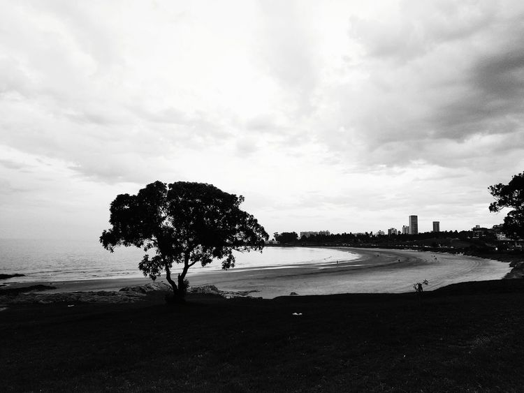 El arbol Beach Cloud - Sky Tree Water Outdoors Nature Day No People Beauty In Nature Sky Sea Sand Bnw Light And Shadow Photo EyeEm Selects Foto City EyeEmNewHere
