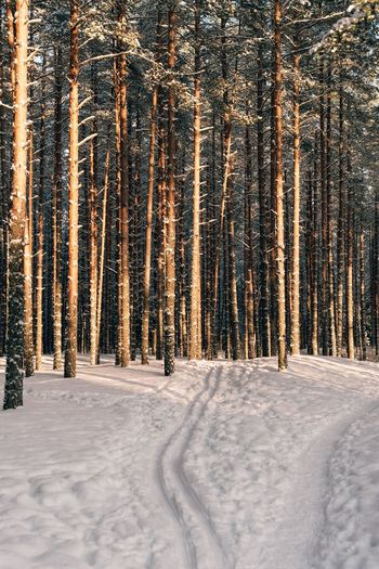 Skiing Snow Winter Cold Temperature Pinaceae Tree Coniferous Tree Pine Tree Nature Land No People Forest Landscape Day Beauty In Nature Snowing My Best Photo
