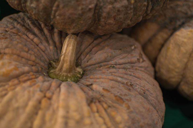 Close-up Food And Drink No People Food Vegetable Freshness Full Frame Nature Day Healthy Eating Wellbeing Indoors  Still Life Natural Pattern Animal Themes Raw Food Animal Pattern Backgrounds Brown