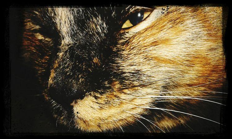 Cat♡ I Love My Pet Cat Lovers Gatosfelizes