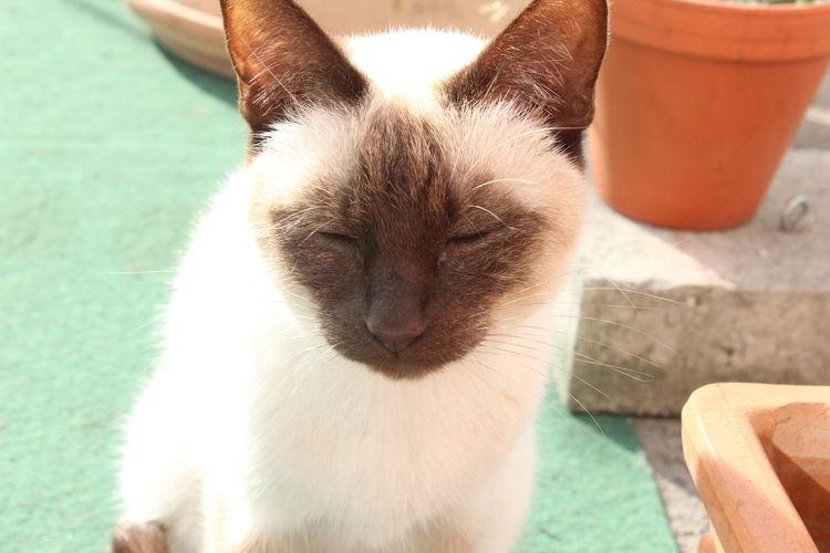 Bright Cat Cat