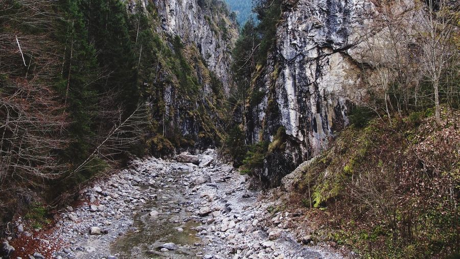 Schlucht des roten Lech Plant Tree Growth Day No People Nature Beauty In Nature