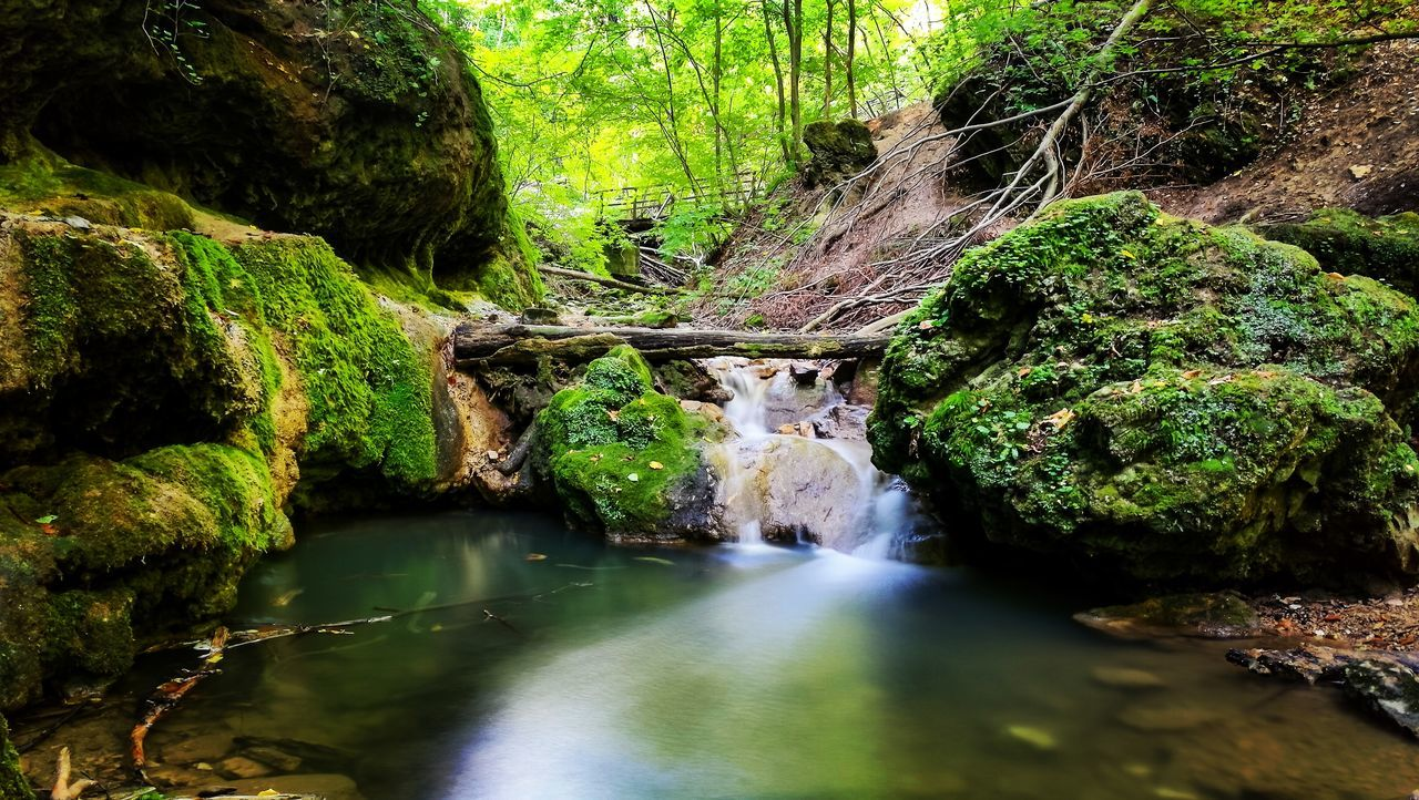water, tree, forest, rock, scenics - nature, plant, beauty in nature, nature, rock - object, flowing water, moss, solid, day, green color, waterfall, long exposure, tranquility, no people, land, flowing, outdoors, stream - flowing water, rainforest