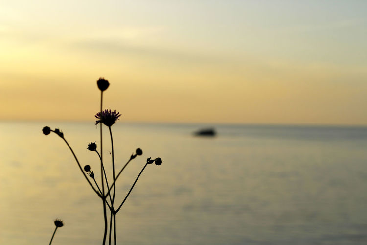 Beauty In Nature Close-up Flower Focus On Foreground Fragility Freshness Greece Greece, Loutraki Growth Horizon Over Water Idyllic Lesvos Lesvos Greece Lesvos Island Nature No People Outdoors Scenics Sky Stem Sun Sunset Tranquil Scene Tranquility
