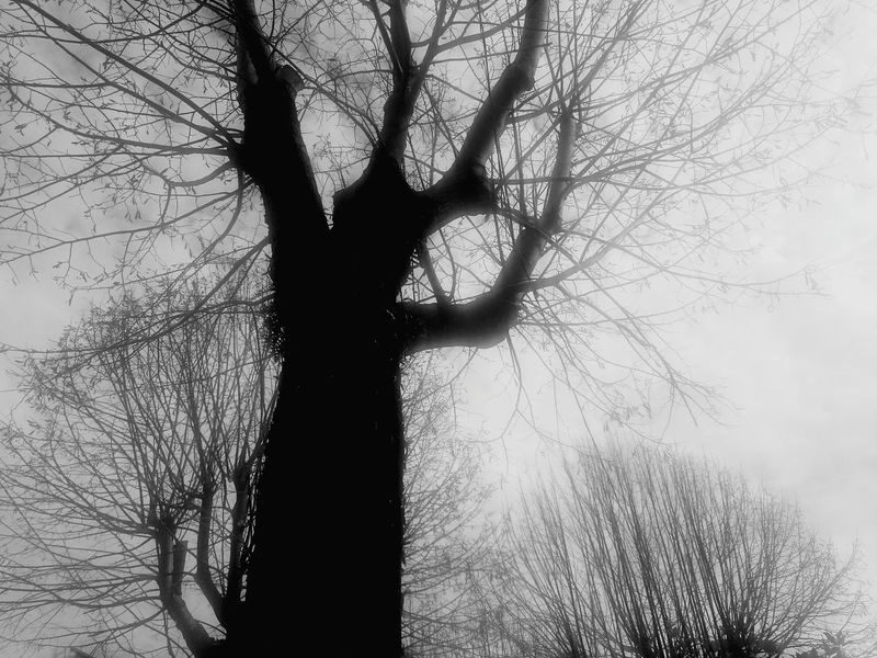 Low Angle View Sky Silhouette Tree Day Bare Tree No People Nature Outdoors Branch Black And Withe Valongo City Park Eyeemphoto Film The Week On EyeEm