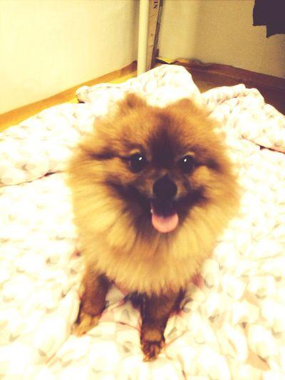? Ilovemydog My Dog