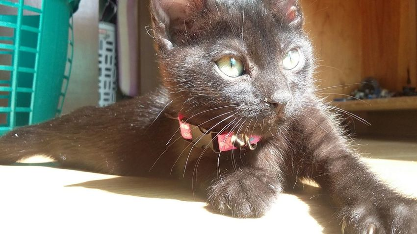 Check This Out Taking Photos No Filter Sunny Green Eyes Cute Cat Animals Pets Blackcatlove