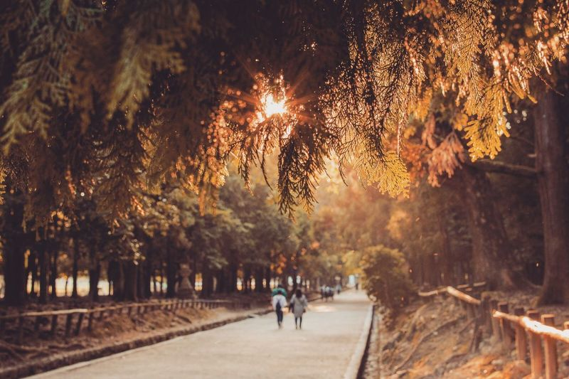 People walking on footpath in park during autumn