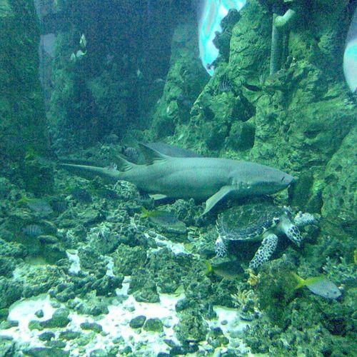 Черепаха заползла под спящую акулу океанариум ретроспектива Retrospective 28.10.2012