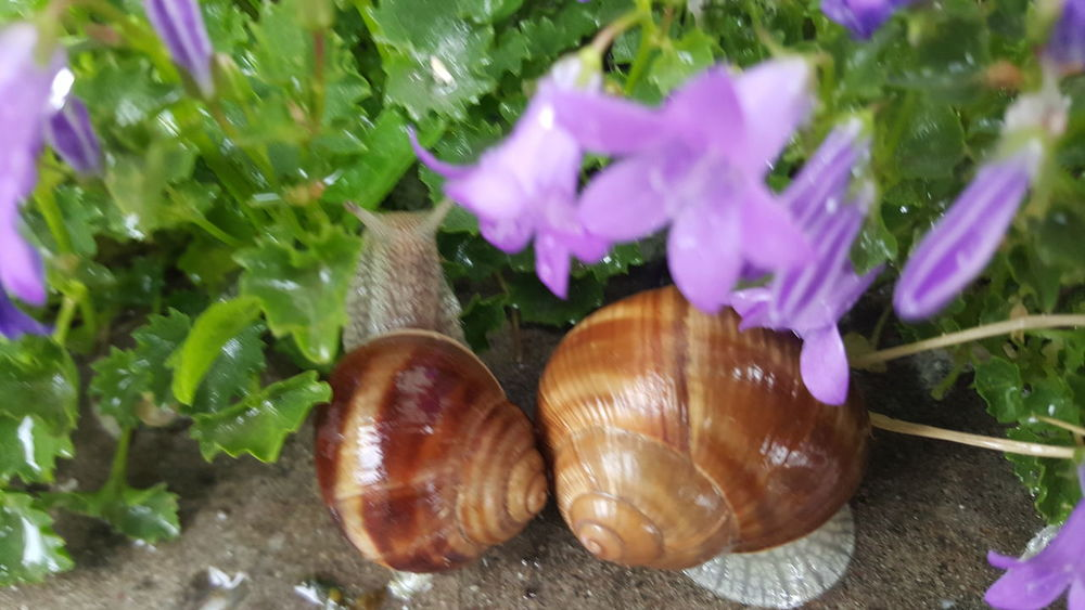 Eyem Nature Lovers  Snails🐌 Snails In The Rain Nature Flovers Green Spring Flowers Light And Shadow Nofilternoedit Samsung Galaxy S6 Edge Nofilter