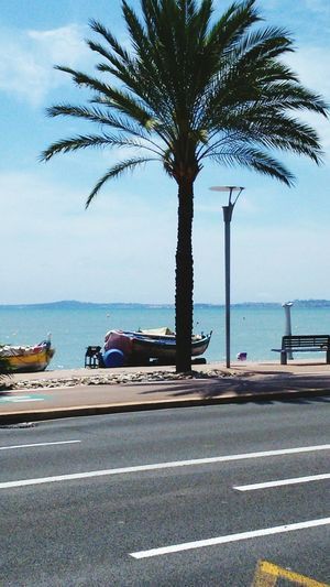 Promenade De La Mer Bateau Palmier  Côte D'Azur