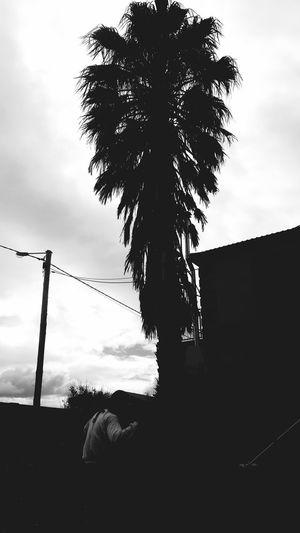 Palm Tree The Headless Man Garden Sky Cloud - Sky Scenics Beauty In Nature