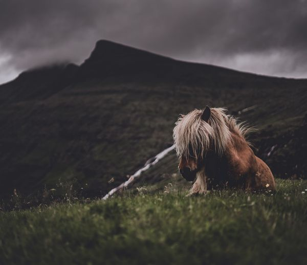 Horse relaxing on grassy field against cloudy sky