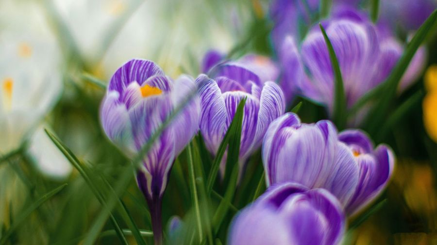 Flowering Plant Flower Plant Beauty In Nature Growth Vulnerability  Freshness Day Nature Petal Inflorescence Flower Head No People Focus On Foreground Outdoors Botany Fragility Purple Close-up Park