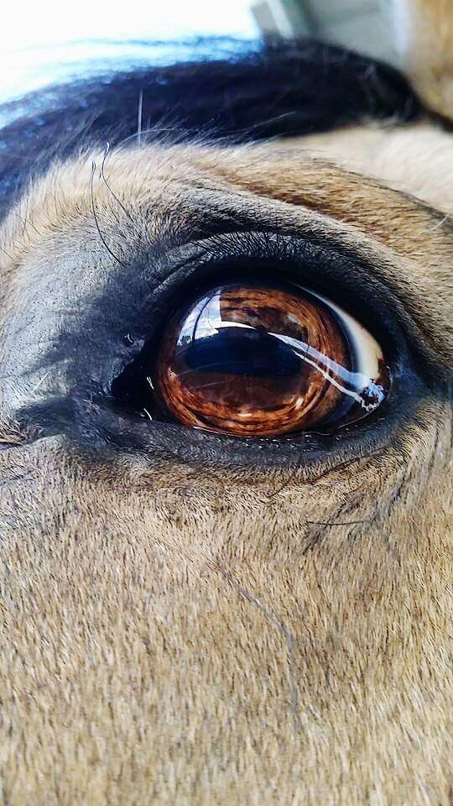 close-up, one animal, animal body part, animal themes, animal eye, eyesight, animal head, extreme close up, part of, extreme close-up, sensory perception, detail, human eye, domestic animals, eyelash, selective focus, vision, portrait, looking at camera