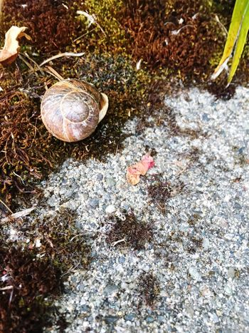 Wildlife & Nature Took On Iphone 6s Seattle Nature Shot On IPhone 6s Shot With Iphone 6s