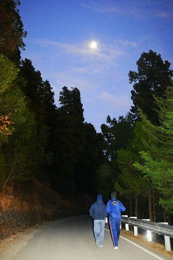 Rear view of people walking on road amidst trees against sky