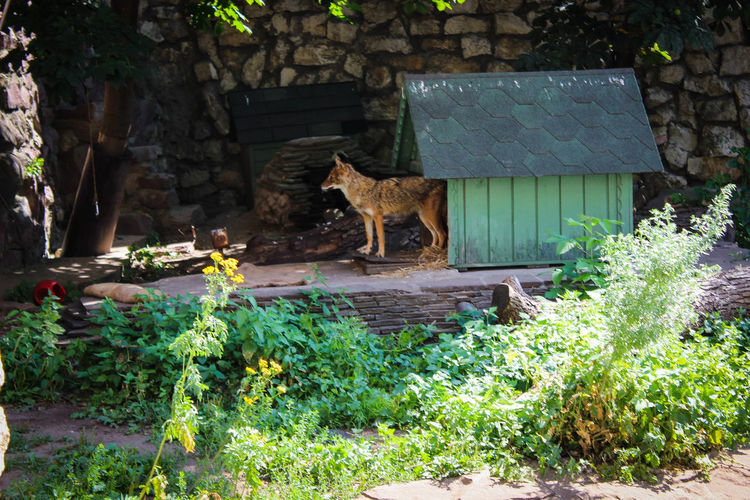 Animal Themes Animals In The Wild Day Fox Mammal Nature No People One Animal Outdoors Plant