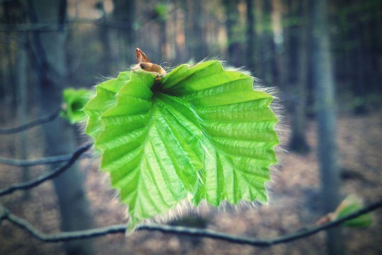 Nature Tree TreePorn Beautiful Nature Spring Zielony Las Nature Colors Mint By Motorola Leaf Leaf 🍂