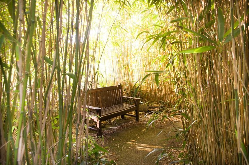 Nikon Absence Bamboo - Plant Beauty In Nature Chair Day Empty Forest Grass Green Color Growth Land Nature No People Outdoors Plant Seat Sunlight Tranquility Tree Wood - Material