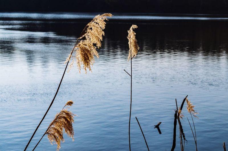 At the lake Lake Plant Plants Water See Planzen Pflanze  Köln Cologne , Köln,  Cologne Light