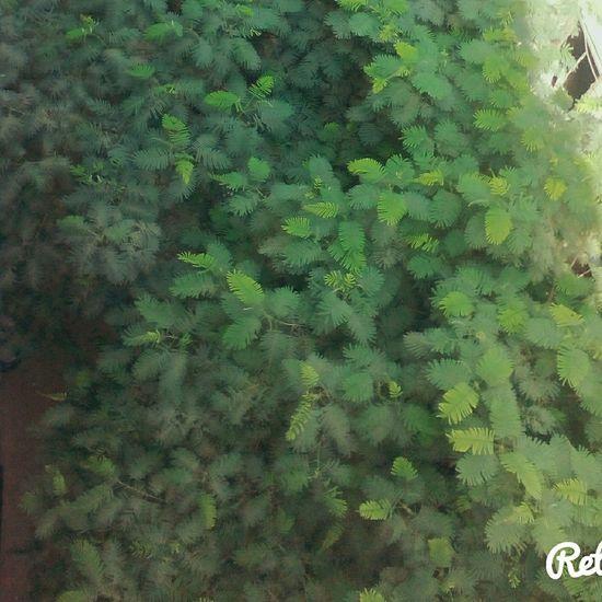 Morning Greentree Taking Photos Smile Winter Enjoying Life