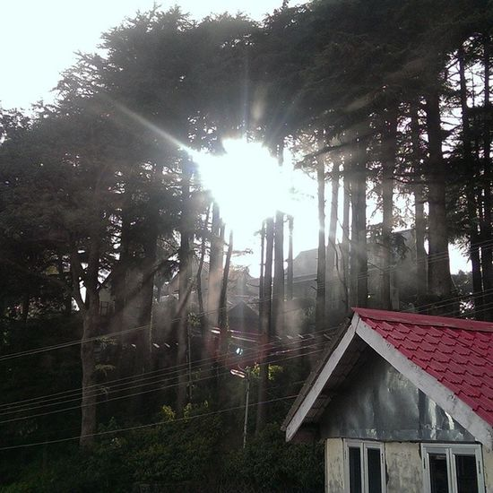 Sunrays finding there way out of Woods in Dalhousie Himachal Tree Forest Sunlight Morning Hut Mountain Nature Greenery Incredibleindia Indiapictures India Indiatraveller