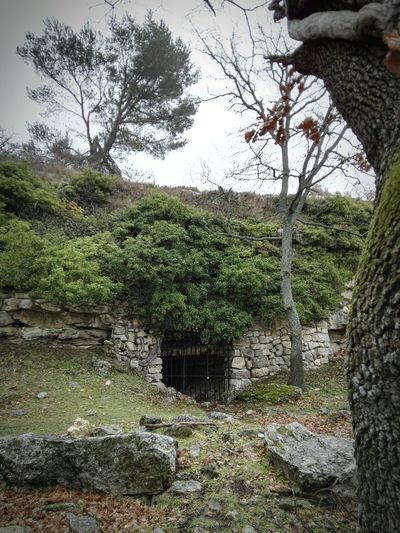 Abandoned Ruins Branch Source Of Water Architecture Nature Tree Rain