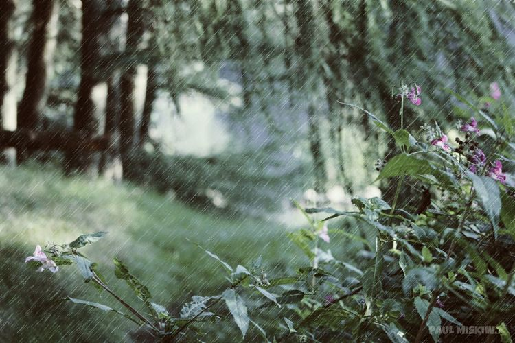 Sunshine On A Rainy Day Himalayan Balsam Forest Trees And Green Rain Check This Out Taking Photos Hanging Out Enjoying Life