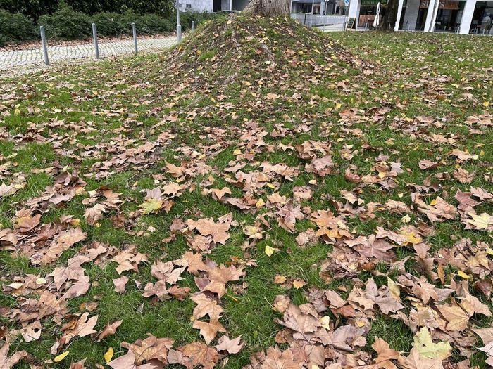 Sunlight falling on dry leaves on field