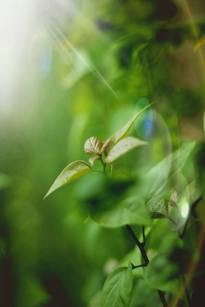 Life is simple, its just not easy... Green Green Green!  Leafs Photography Nature Lovers ♡♡♡ Hanging Around Enjoying Life Nature_collection