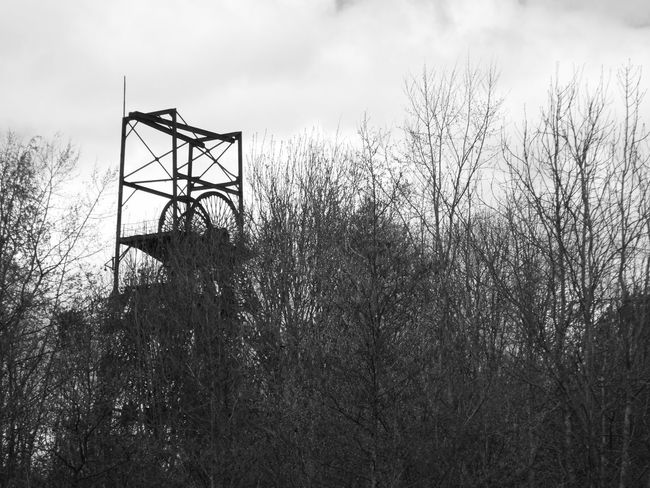 Trees Industry Vs Nature Industry V Nature Industry Meets Nature Industrial Heritage Steel Structure  Headgear Coalmine Astley Green AstleyGreen Colliery Black And White Photography Black & White Black And White Blackandwhite Industrial Landscape