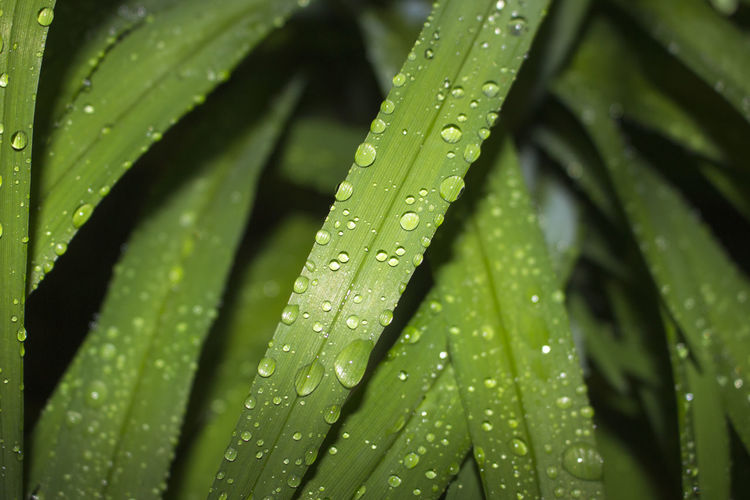// Green.Droplets 🌿💧 Green Color Leaf Close-up Nature Backgrounds Drop Growth Freshness Palm Tree Full Frame Plant Water No People Day Outdoors Canon700D Canon Photography Shot On Canon EyeEmNewHere